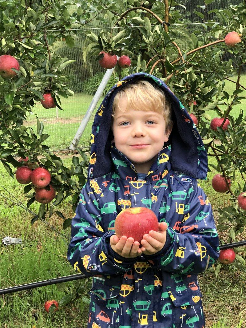 Many happy little apple pickers...