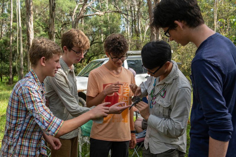 They set nets and caught 50 birds : a fascinating experience for Year 11