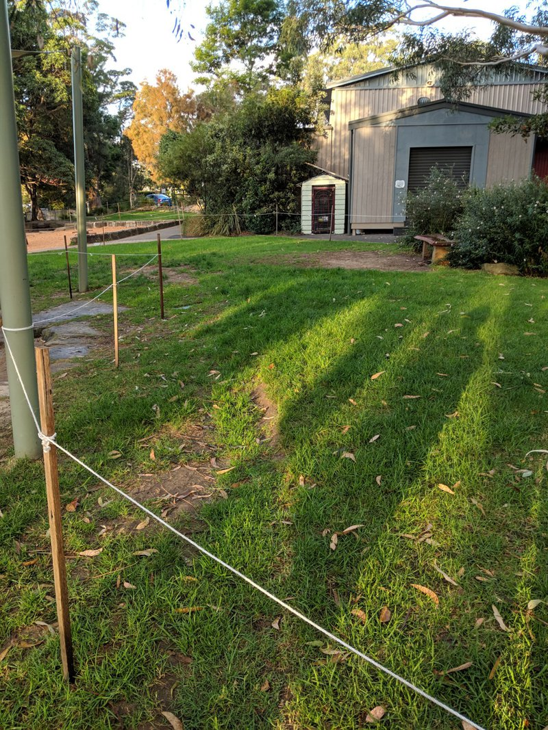 The grass is also rehabilitated over the break at Castlecrag