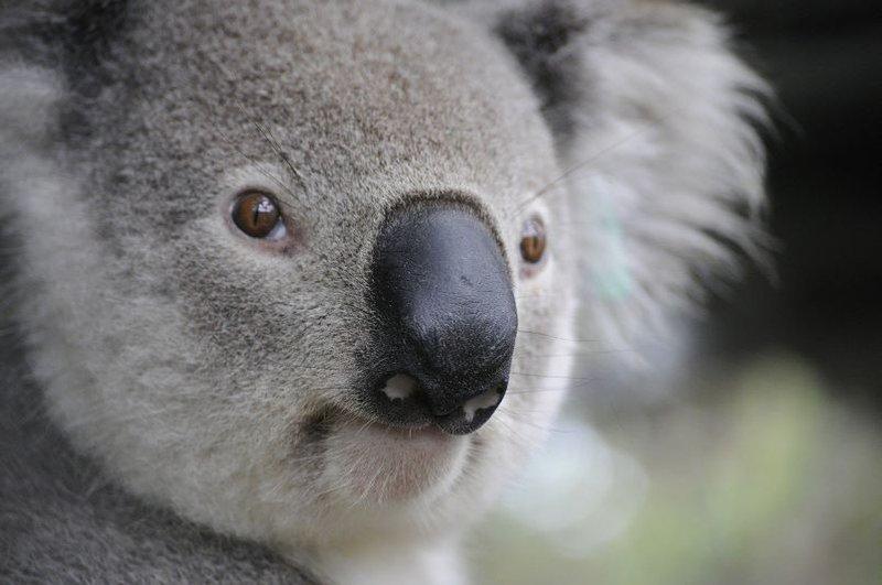 Help bushfire affected animals