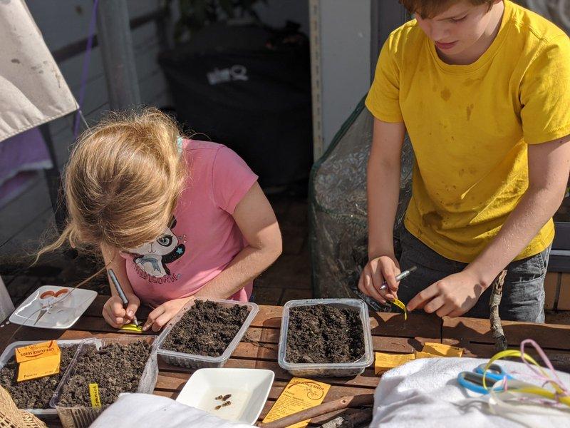 Class 6 Home Garden Project