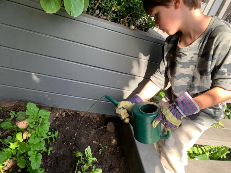 Kindergarten planting bulbs for springtime