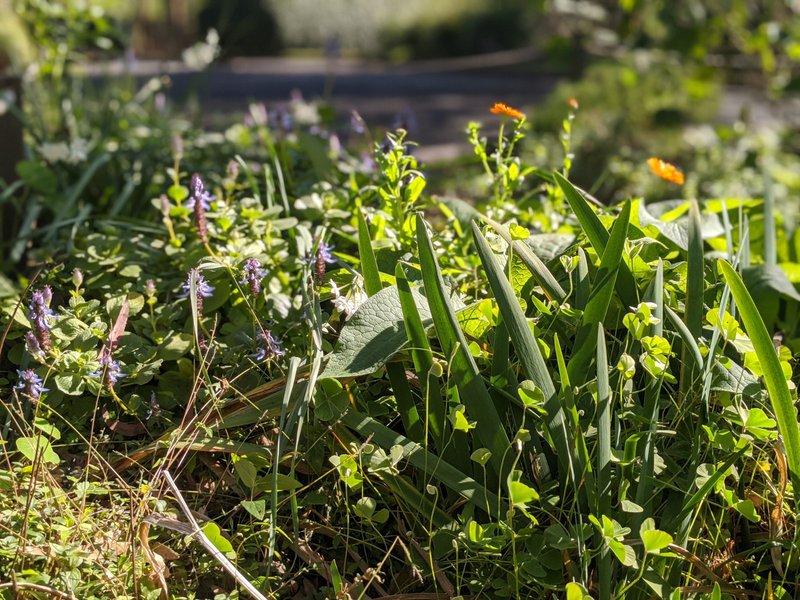 Teas from the garden at Castlecrag