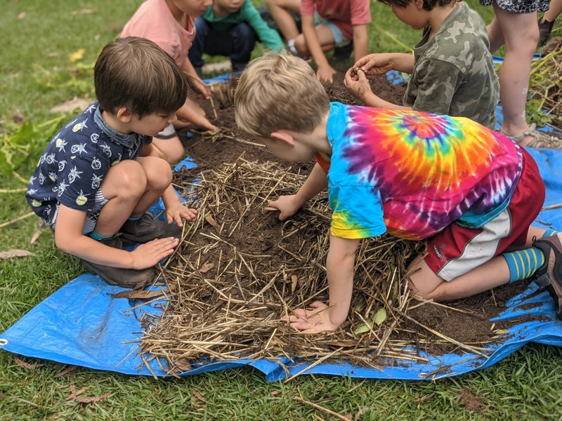 Kindergartens harvest their potatoes