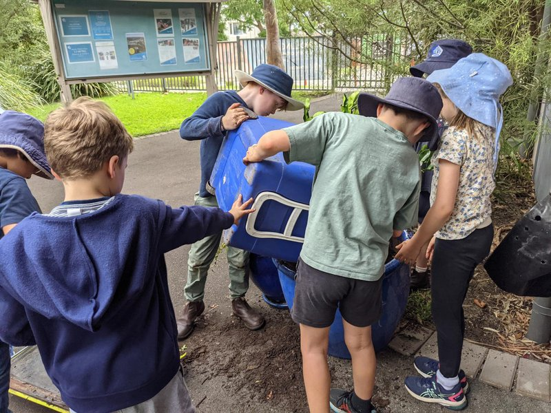 Class 2 plant the Kefir lime tree and Kindy in the compost