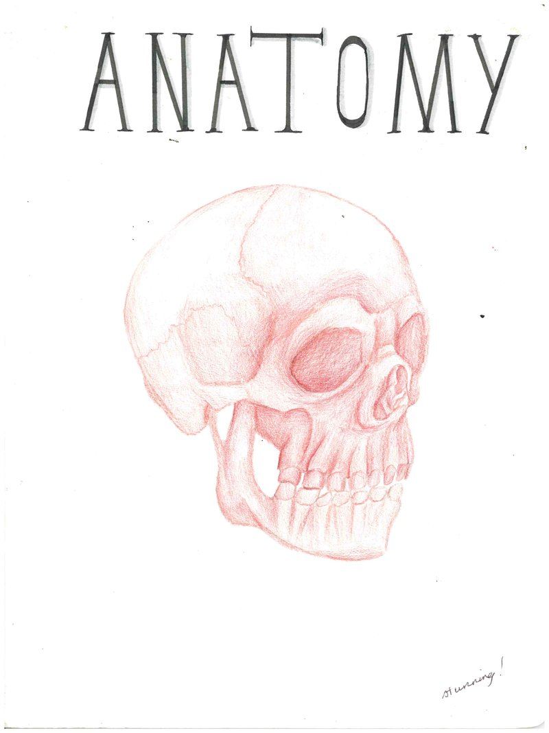 Year 8 Anatomy Main Lesson - a body of work