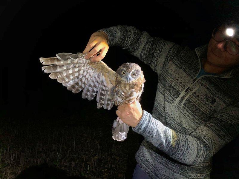 Stanley owling around campus