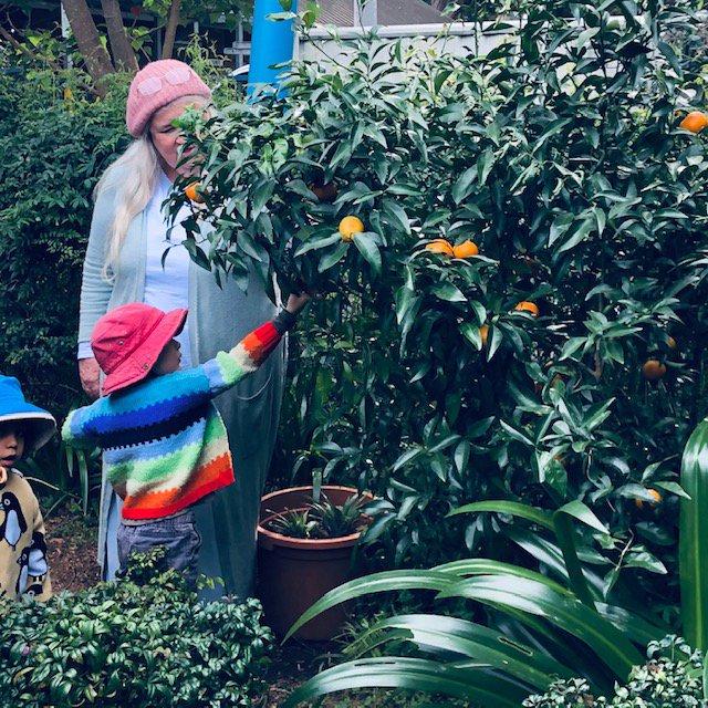 Preschoolers enjoy Ripe Golden Mandarins