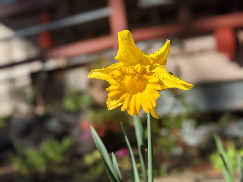 Spring has sprung early at Castlecrag!