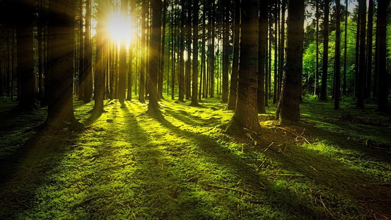 Forest bathing for staff wellbeing