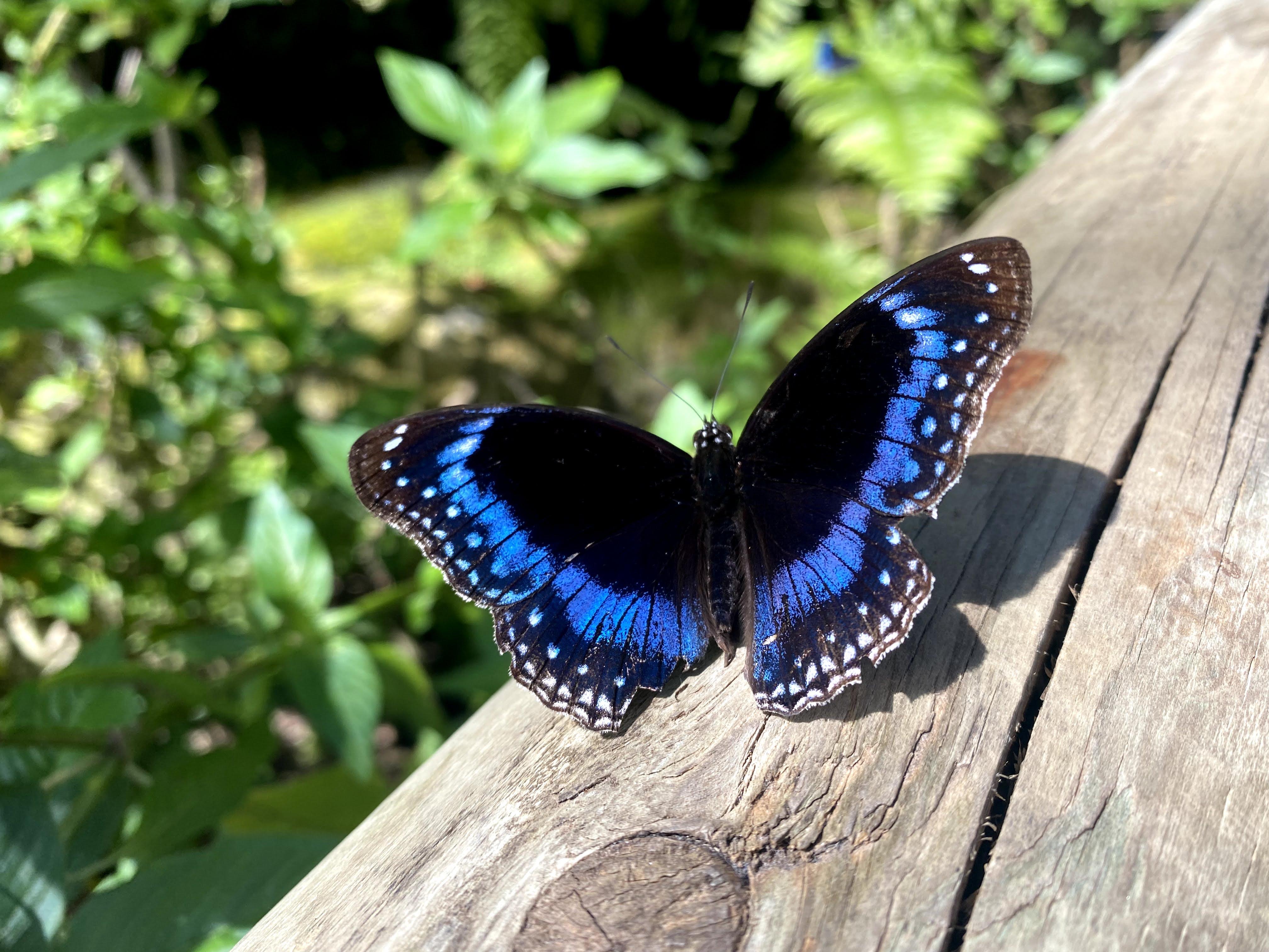 Learning about butterflies at Kuranda