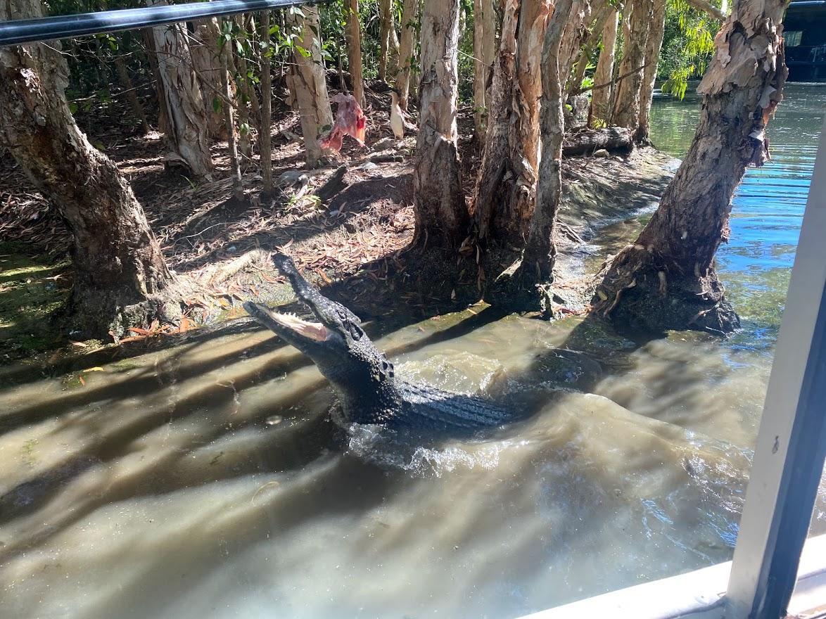 Crocodile boat cruise